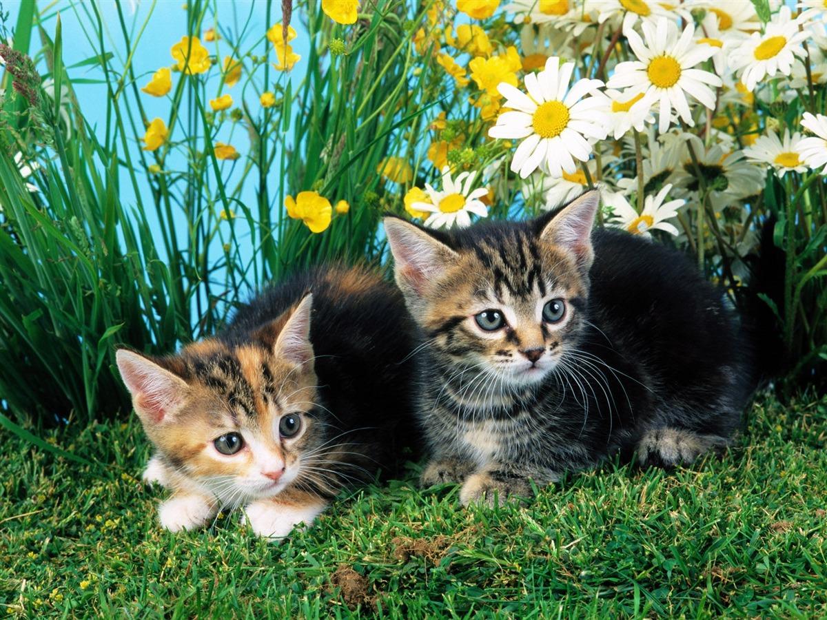 Cat Rescue Whatcom County